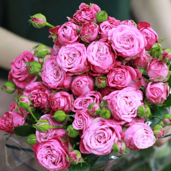 Кустовая Роза «Леди Бомбастик»