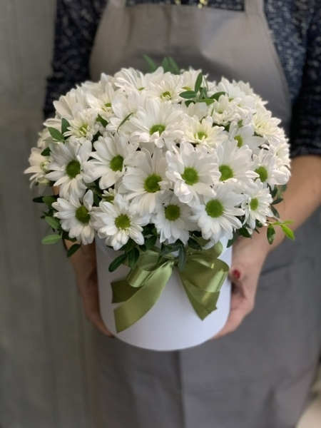 Хризантема белая ромашка «Кенеди»