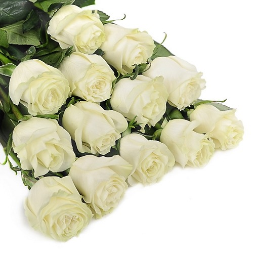 Роза белая 80 см